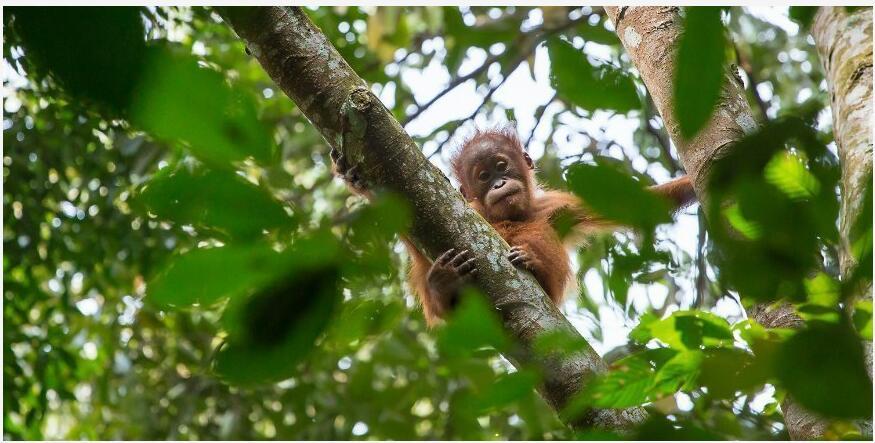 Sumatran tropical rainforest, Indonesia